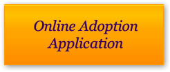 Online Adoption Application