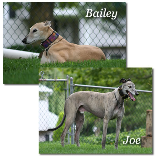 Bailey & Joe